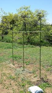 きゅうりの苗と支柱を