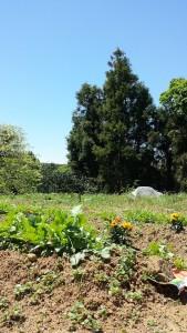国東の空と農園
